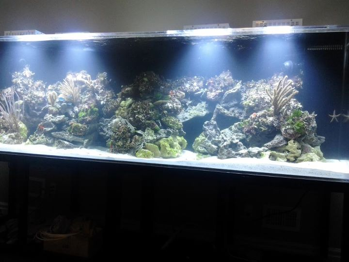 Coral Reef Aquarium - Hardware - t-8 led look to grow coral w/o expensive fixtures!!!