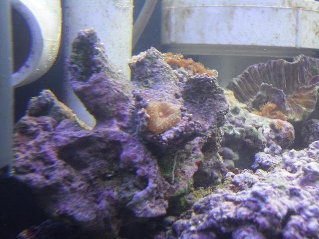 Coral Reef Aquarium - Identification Forum - Help me identify this!