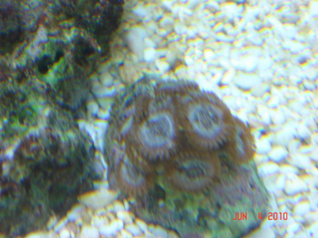 Coral Reef Aquarium - Identification Forum - name for this?