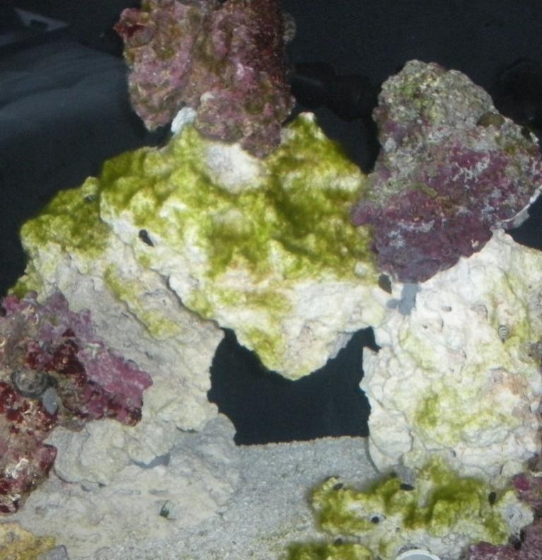 Name:  Algae 112010-2.jpg Views: 268 Size:  81.7 KB