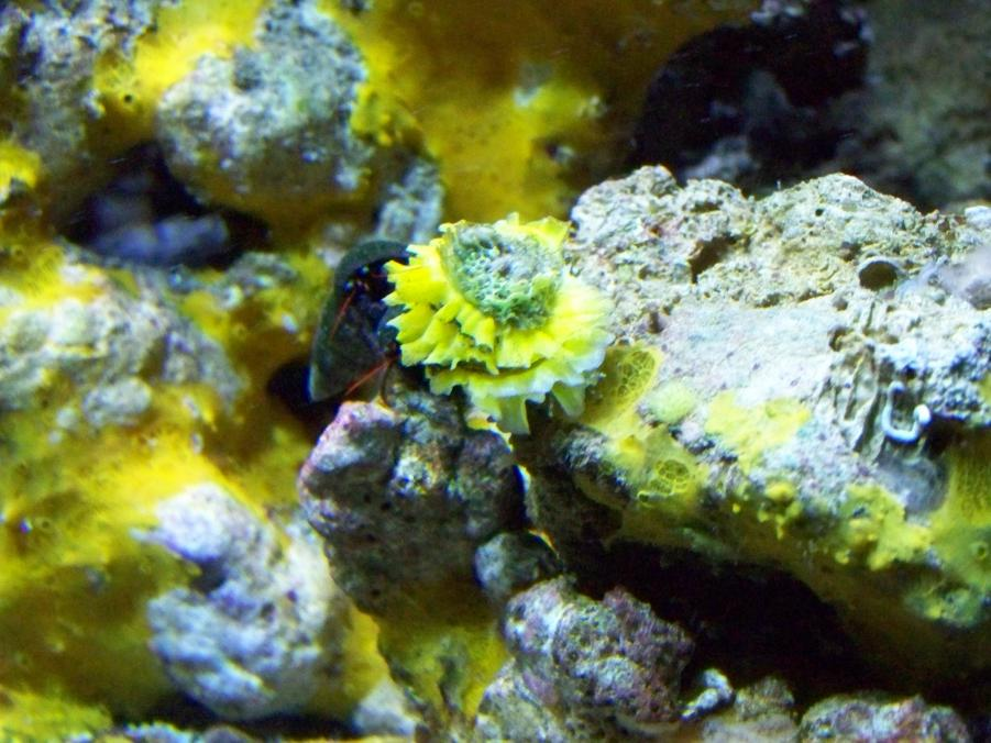 Coral Reef Aquarium - Identification Forum - Thorny Oyster?