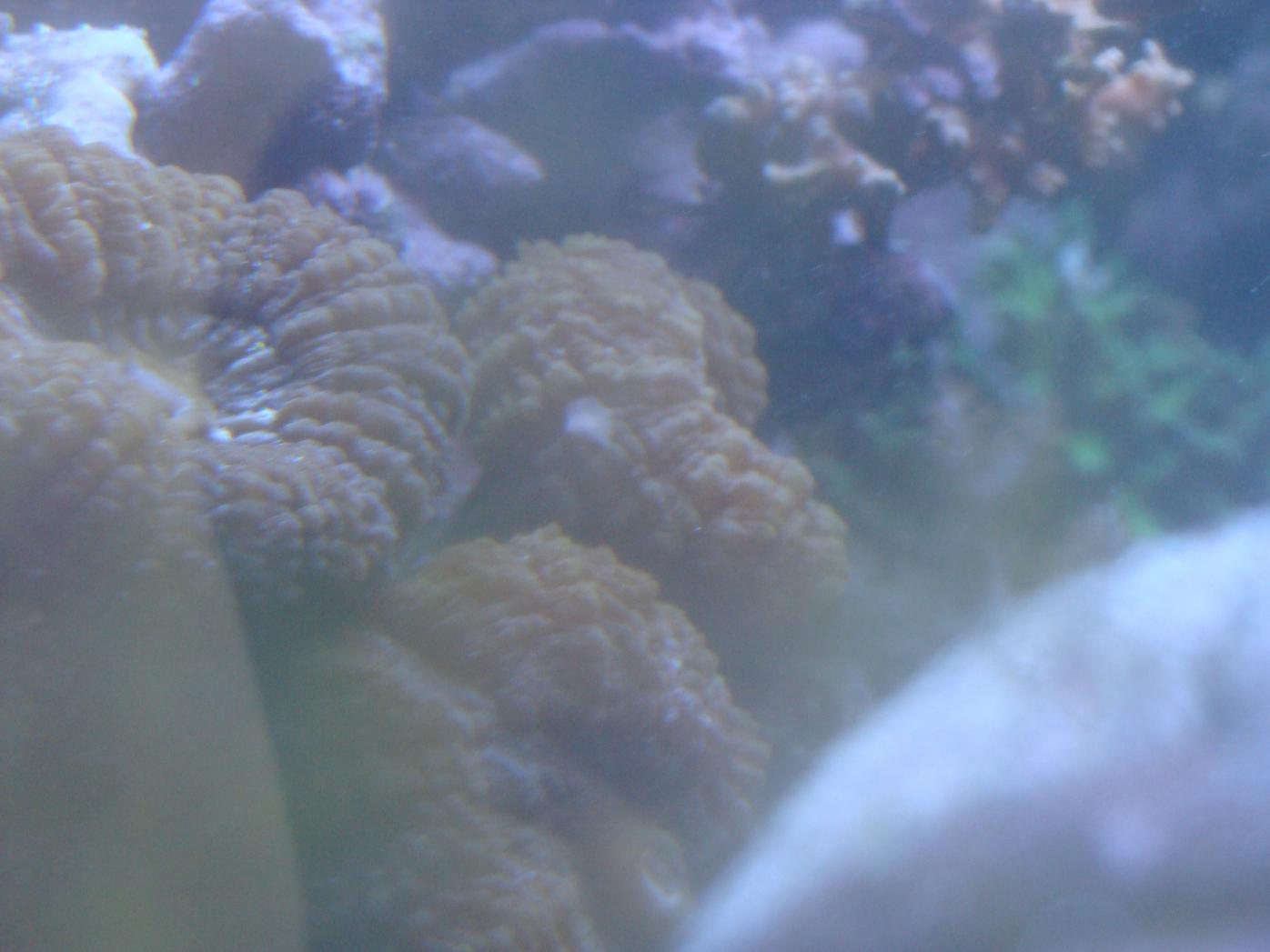 Coral Reef Aquarium - Identification Forum - Wazzit?