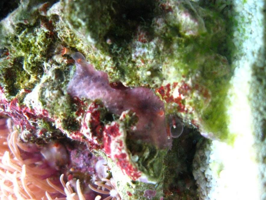 Coral Reef Aquarium - Identification Forum - What the heck is that stuff?