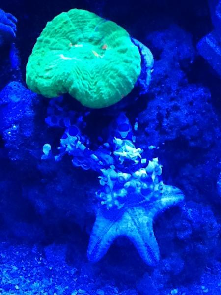 Coral Reef Aquarium - Invert Index - dinner for two !!!