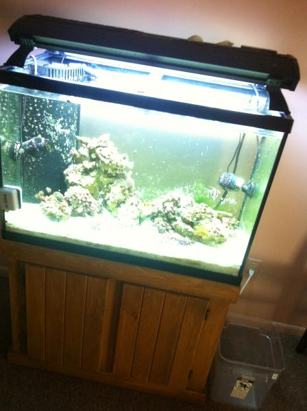 Coral Reef Aquarium - Livestock Sales & Trades - 65g teardown, selling everything