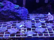 Reef Aquarium Livestock Sales & Trades