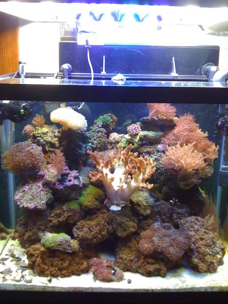 Coral Reef Aquarium - Livestock Sales & Trades - selling out