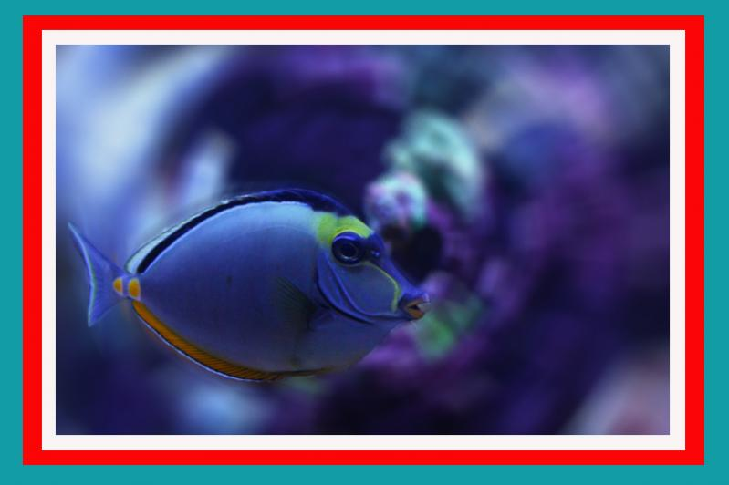 Coral Reef Aquarium - Marine Fish - ***free mohawks**& fishy love*****