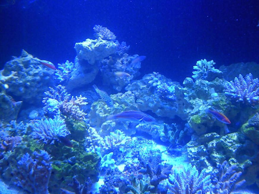 Name:  aquarium 013.jpg Views: 57 Size:  94.7 KB