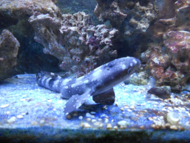 Coral Reef Aquarium - Marine Fish - my shark