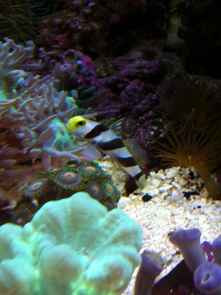 Coral Reef Aquarium - Marine Fish - what fish would you put in a 2.5g tank!