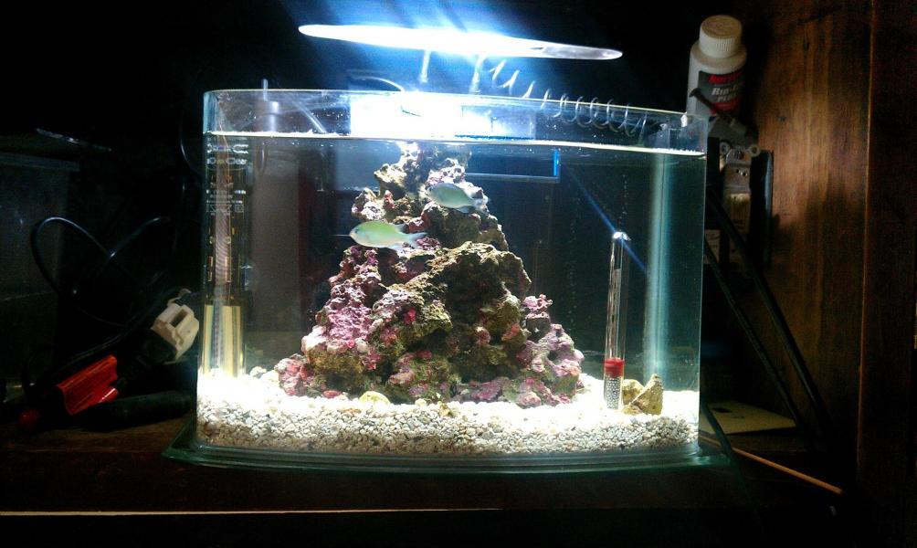 3 gal pico nano reef