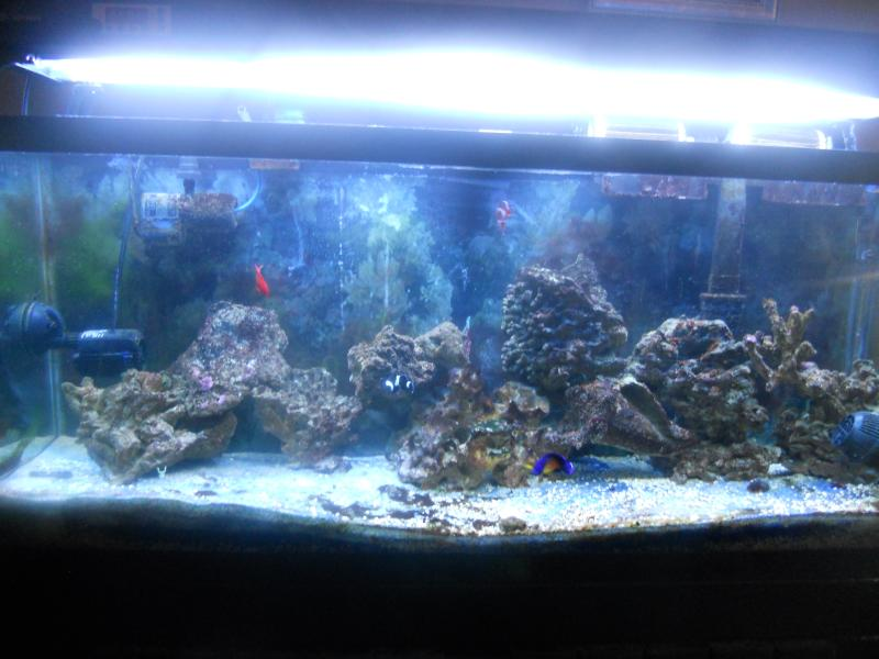 Coral Reef Aquarium - Member's Reefs - 75 gallon keeping it simple