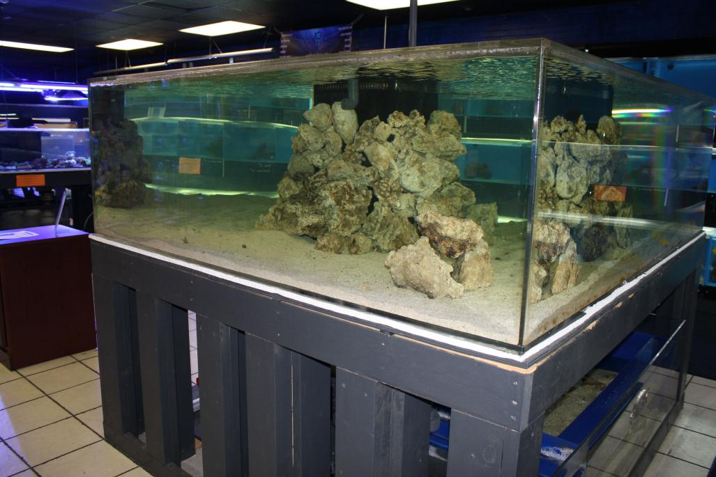 Coral Reef Aquarium - Member's Reefs - Amazon Stingrays 750 Gallon Mega Reef
