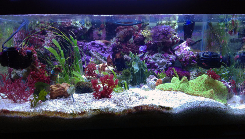 Coral Reef Aquarium - Member's Reefs - Bongo Shrimp's 10g Tide Pool