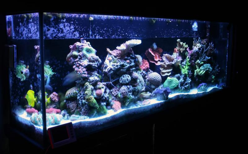Coral Reef Aquarium - Member's Reefs - Esta's not so mini reef ;)