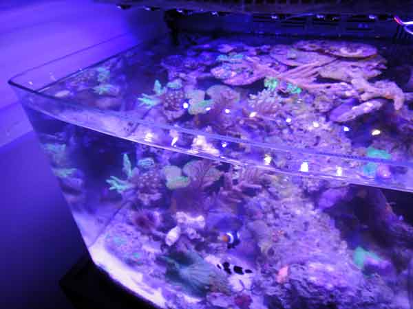 Coral Reef Aquarium - Member's Reefs - jimsflies Invert Ranch