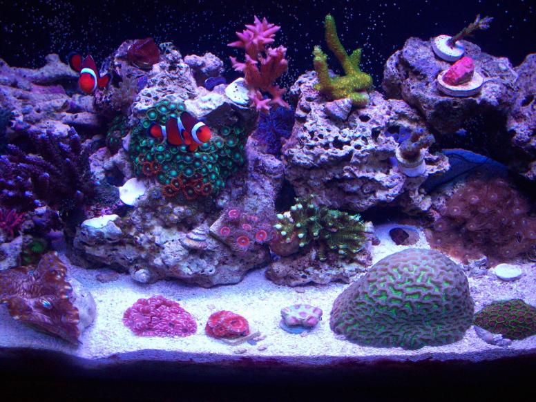 Coral Reef Aquarium - Member's Reefs - jolson10450's 29g mixed reef