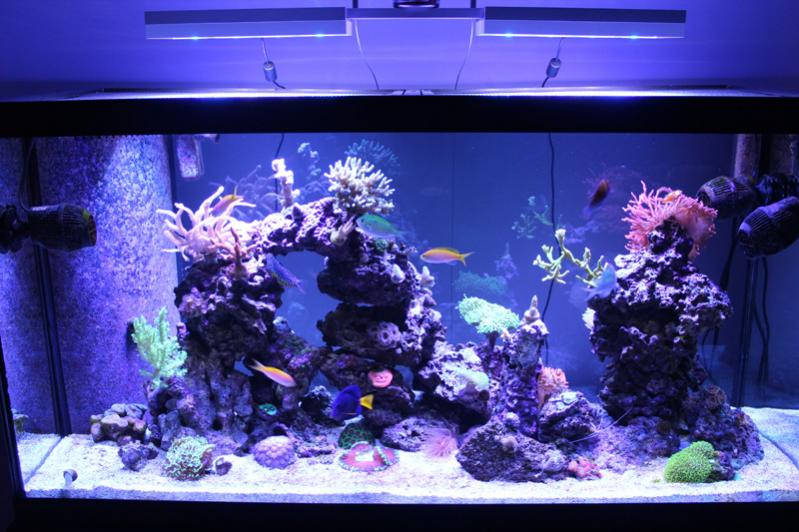 Coral Reef Aquarium - Member's Reefs - Member's Official Full Tank Shot Thread