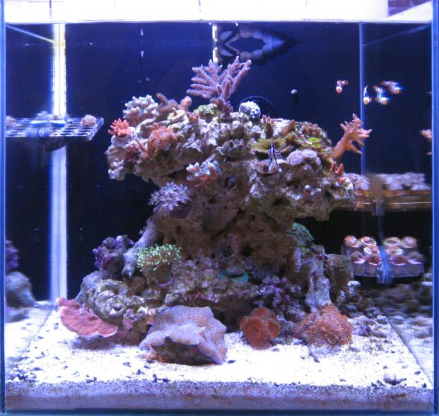 Coral Reef Aquarium - Member's Reefs - Mr. Microscope's 25 Gallon Cube