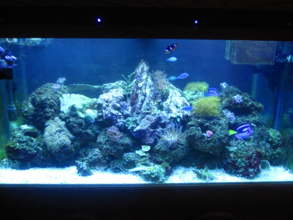 Coral Reef Aquarium - Member's Reefs - My 100g Mixed Reef