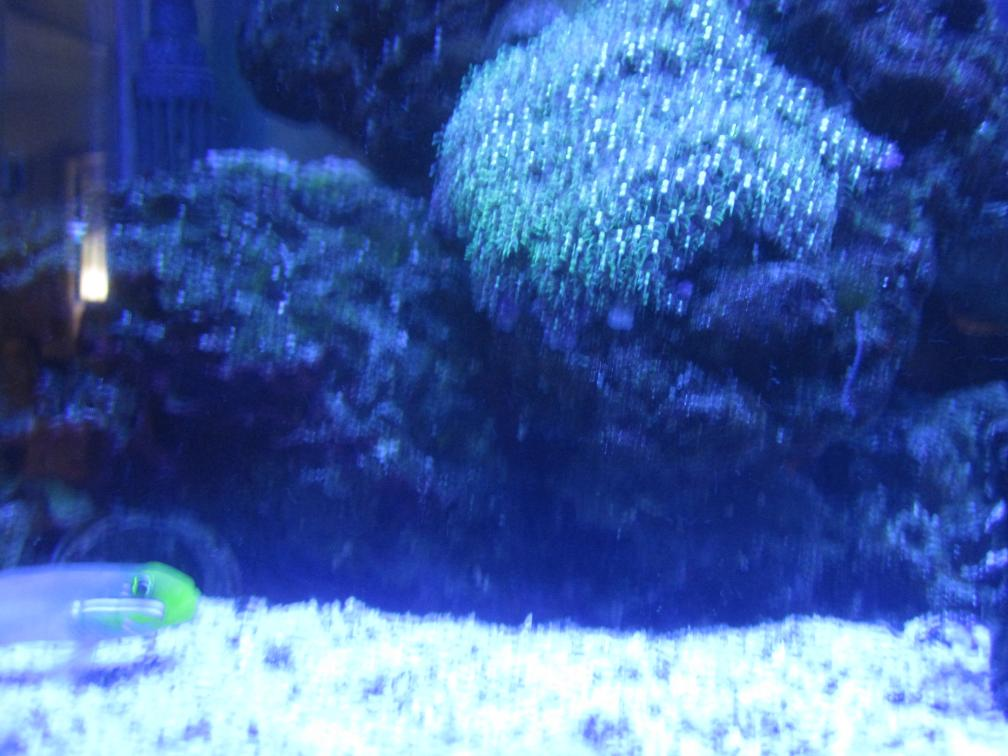2416 clam - Playing with the camera