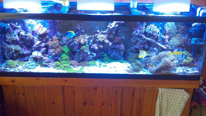 Coral Reef Aquarium - Member's Reefs - my 125 gallon reef