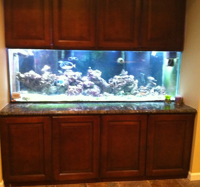 Large reef aquarium 91g 180g my 180 gallon built in for 180 gallon fish tank