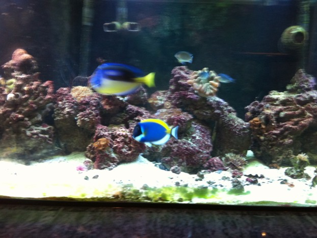Coral Reef Aquarium - Member's Reefs - My 180 gallon built in