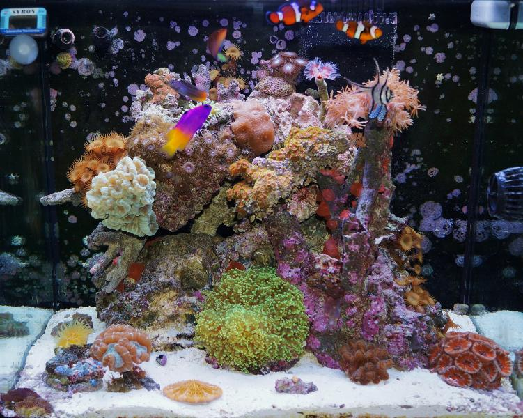 Coral Reef Aquarium - Member's Reefs - My 34 gallon Red Sea Max 130D Saltwater Tank