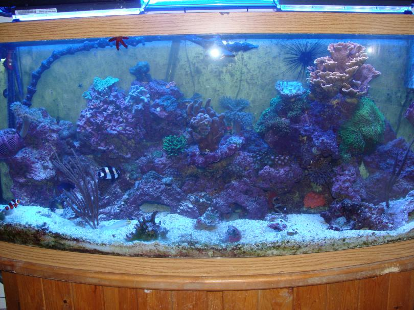 Coral Reef Aquarium - Member's Reefs - My 72 Bow