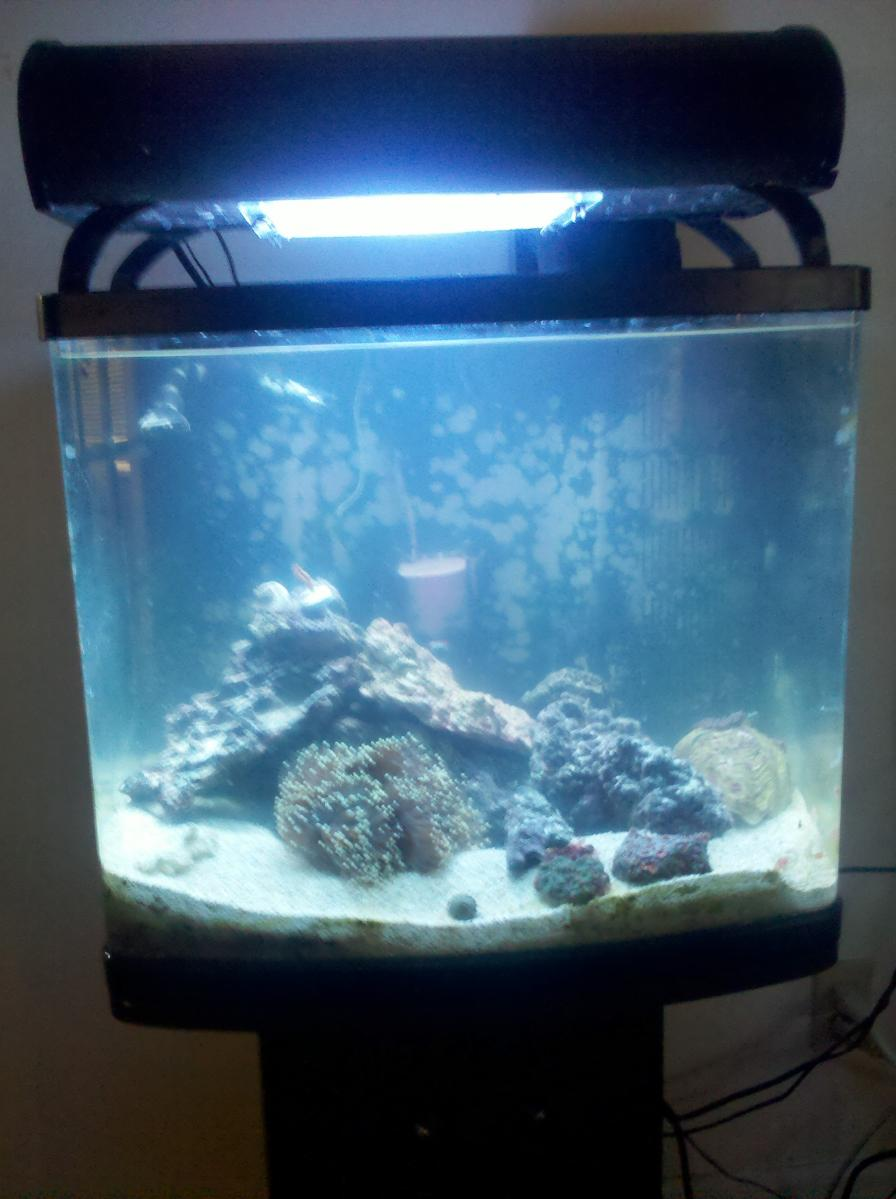 Coral Reef Aquarium - Member's Reefs - my new 24g nano