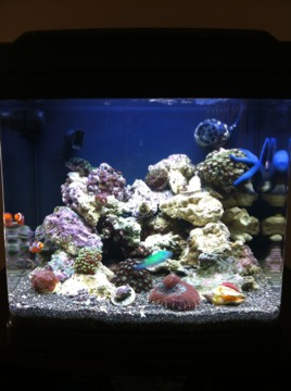 Coral Reef Aquarium - Member's Reefs - New nano 14