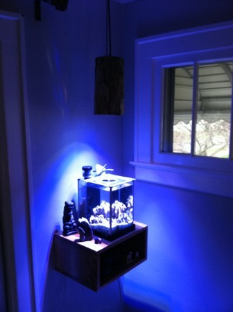 Coral Reef Aquarium - Member's Reefs - Pico LED up and running