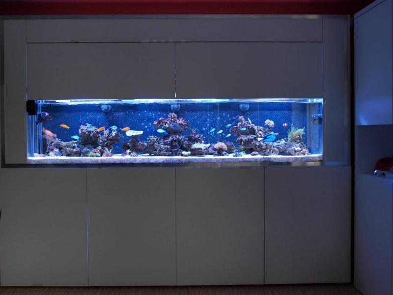 Coral Reef Aquarium - Member's Reefs - Salt aquarium by Steedy