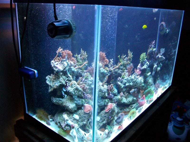Coral Reef Aquarium - Member's Reefs - Sir patricks work in progress-