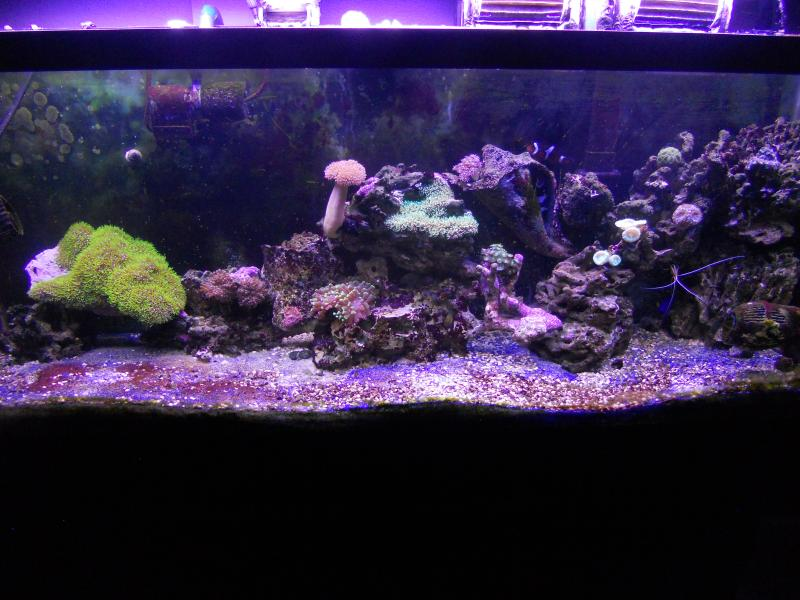 Coral Reef Aquarium - Member's Reefs - starting my reef