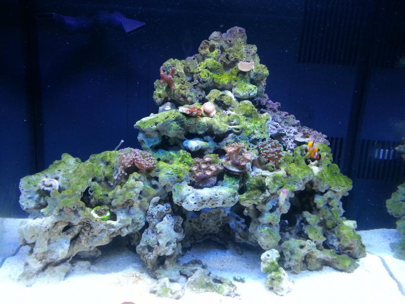 Nano Reef Aquarium 3g 34g Up2no6oods Biocube 29