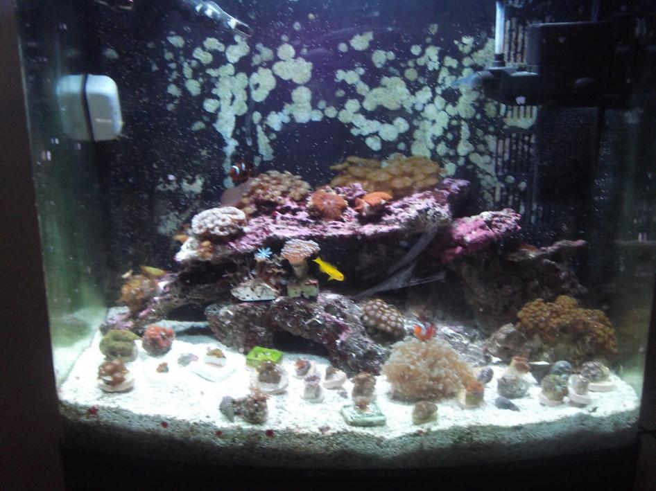 Coral Reef Aquarium - Nano Contest - Scubamomma's 24g aquapod entry