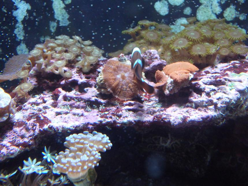 2055 dsc02958 - coral id plz