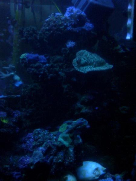Coral Reef Aquarium - Photography - After Midnight.....