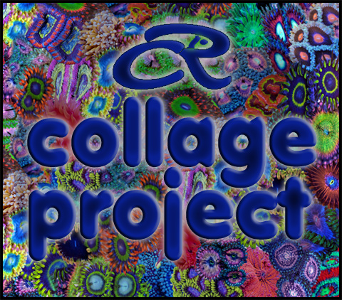 Coral Reef Aquarium - Photography - The CR collage project