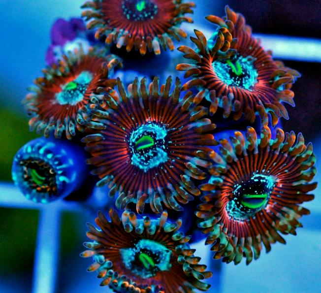 Coral Reef Aquarium - Photography - dont look if u like zoos & palys