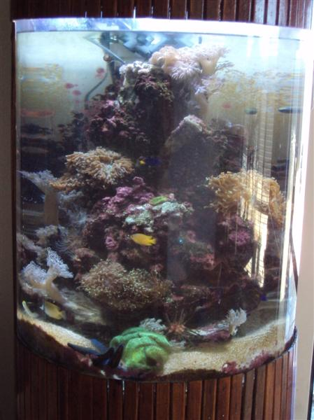 Coral Reef Aquarium - Member's Reefs - Fish tank video