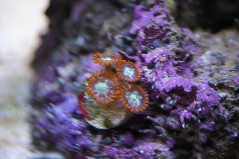 Coral Reef Aquarium - Photography - My new DLSR