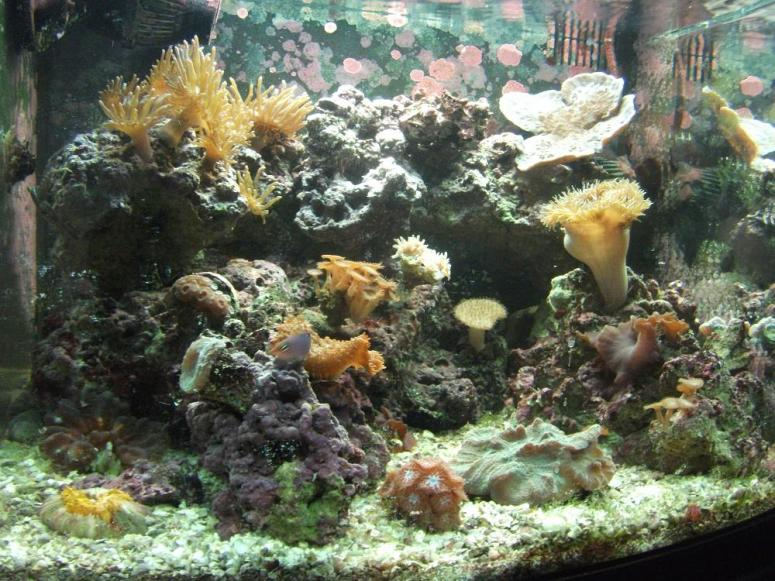Coral Reef Aquarium - Photography - pictures and questions