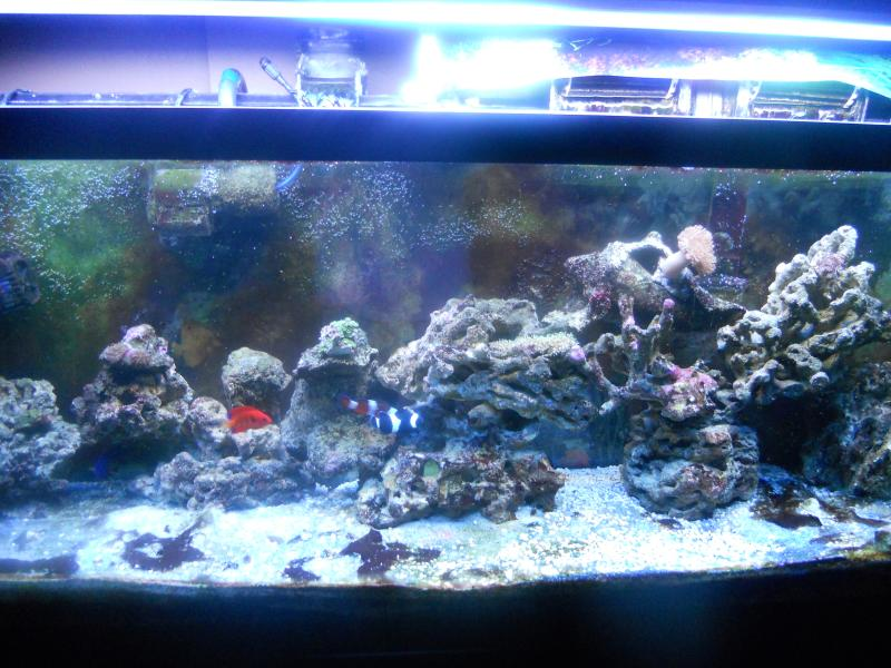 Coral Reef Aquarium - Photography - the tank