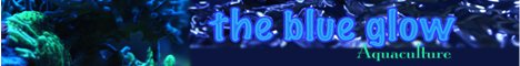 Visit the Blue Glow's website