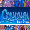 Coralgasm - Welcome Coralgasm as a CR Sponsor!