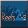 Reefs2Go - Bringing Home the Holiday Cheer- one fish at a time